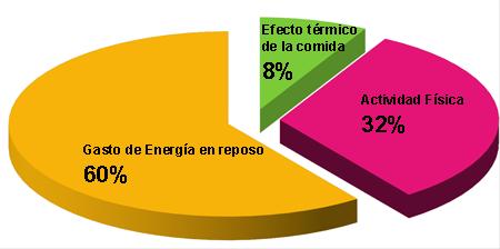 Componentes del gasto energético en una persona activa